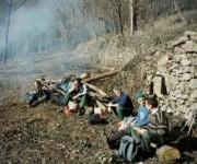TREMPLIN INSERTION - Brigades Vertes_Diapo_005