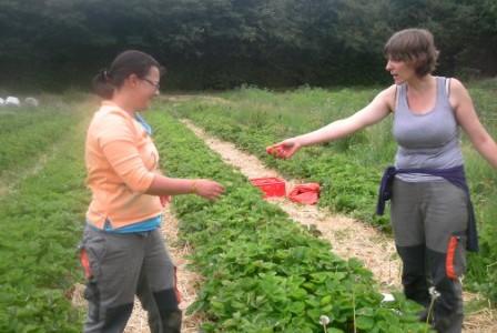 Atre_de_la_Vallee_Cueillette des fraises