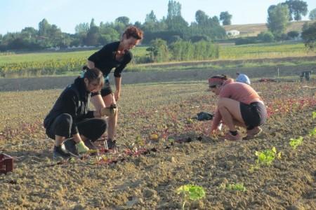 Les Jardin du Girou_agriculteurs au travail