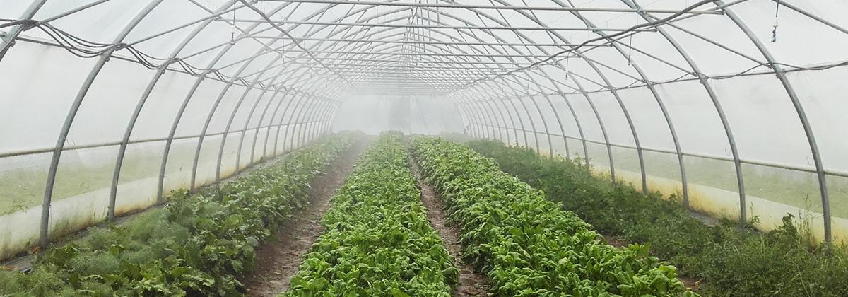 Paru à la fin de l'année 2016, le bilan des 8 ans d'action de la Fondation Rte met en lumière 15 projets soutenus par elle entre 2008 et 2015, leur histoire ainsi que leur territoire. Parmi eux, «Un jardin de cocagne à Palheret» porté par l'association Jardin de Cocagne Lozère (AJCL).
