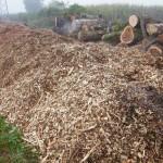 Don de bois entre M. Valsesia, Rte et Fleurs de Cocagne: Le broyat
