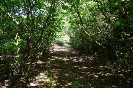 Les bois du Domaine de Mirabeau