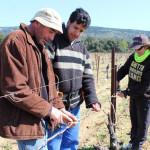 Jean-Charles, vigneron-formateur, enseigne l'art du vignoble à Mounir et Isabelle