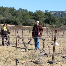 Mounir, Isabelle, Jean-Charles et Pauline sont au travail au cœur des 7 hectares de vigne