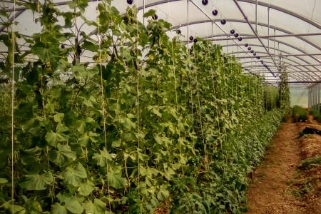 Les plantations sous serre
